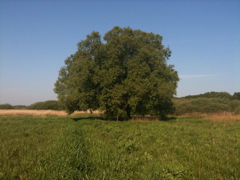 Mit træ fotograferet i maj 2011